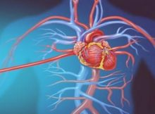 CHMP recommends Praluent's approval to help curb cardiovascular risks