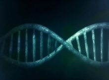 CRISPR Therapeutics, StrideBio extend partnership on gene therapies
